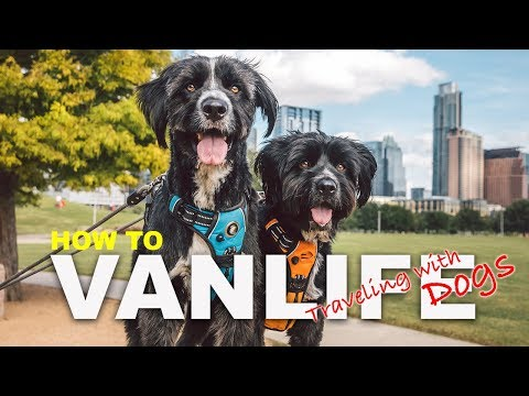 How to Travel with Pets  | Tips for traveling with dogs | Jordan Kahana Escape Campervans