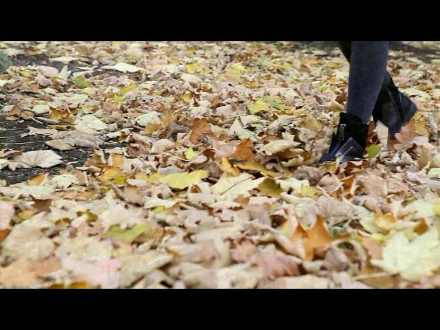 Изображение предпросмотра прочтения – ЕлизаветаСердюкова читает произведение «Закружилась листва золотая…» С.А.Есенина
