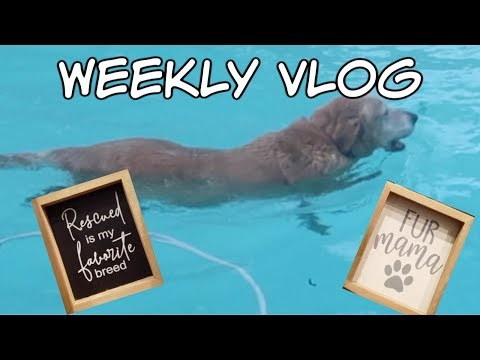weekly-vlog-|-jewlybox-|-shopping-at-kirklands-|-sneaky-pup!