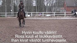 Espoon Talli Oy ratsastus 27 11 / Rosa Ruutsalo