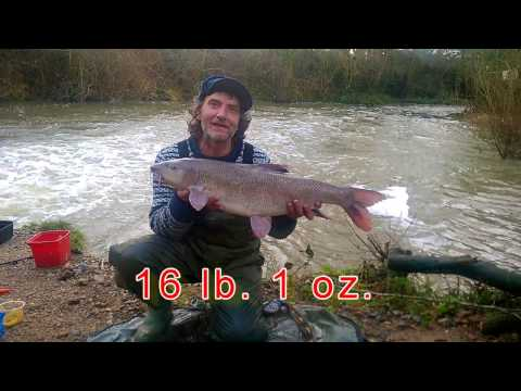Record Barbel 2017- Sussex River Ouse 16lb 1oz.