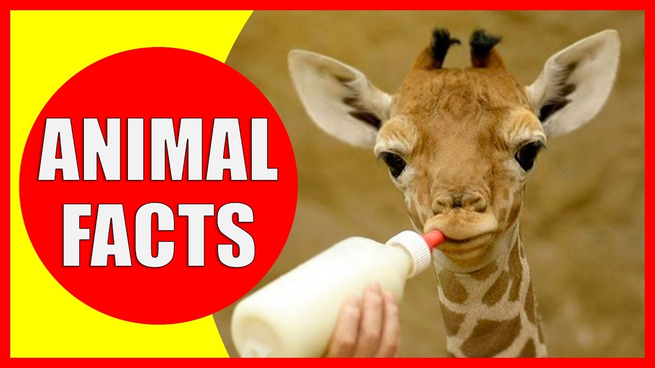 99 interesting facts about animals that will make you smarter