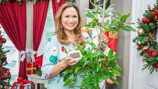 How to Grow Allspice - Home & Family