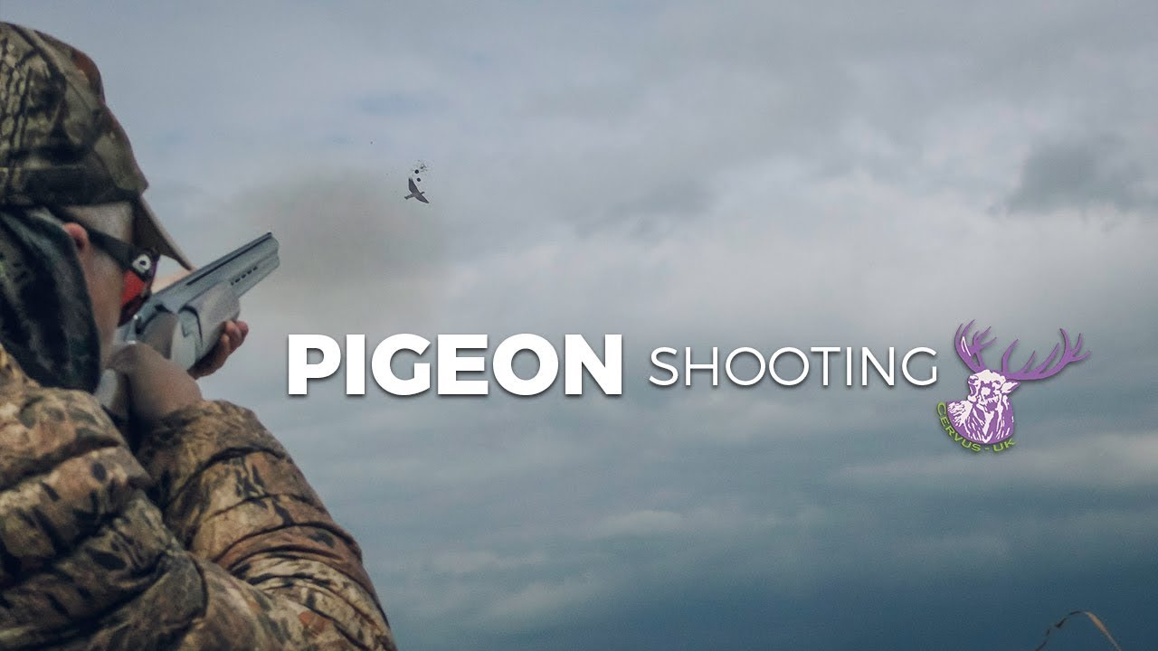 Encounter With Pigeon On Military Ridge >> Pigeon Shooting Youtube