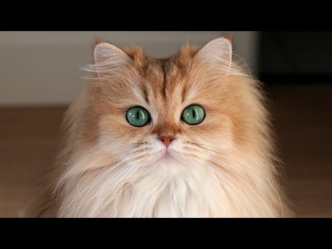 8 FACTS About 'The Most Photogenic Cat In The World'