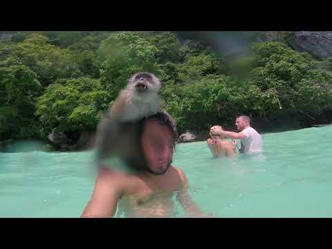 Isla de los monos tailandia