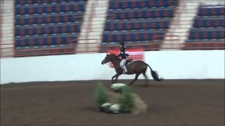 Gingersnap At Harrisburg Horse Show 2014 Large Pony Hunter 1st Trip