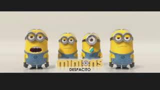 Video Despicato Minions download MP3, 3GP, MP4, WEBM, AVI, FLV November 2017