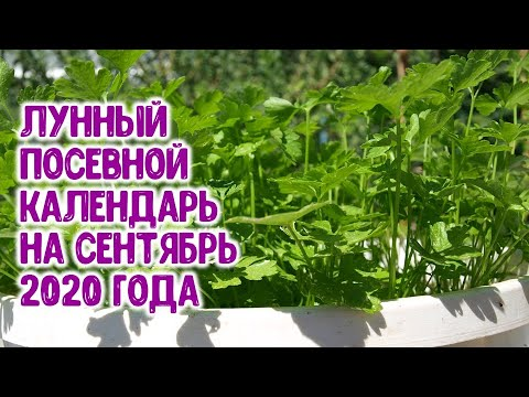 Лунный посевной календарь на сентябрь 2020 года. Агрогороскоп, агропрогноз посевов овощных растений