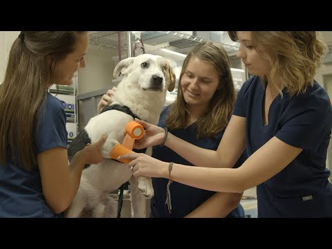 Hands-On at the Vet Tech Institute