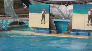 SeaWorld San Diego Shamu Believe Show 2009 Part 3 of 3 in HD