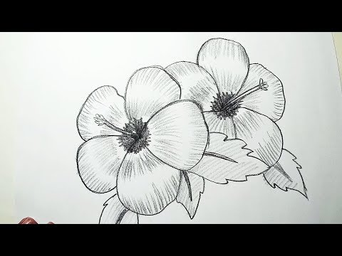 How to Draw Hibiscus Flowers || Pencil Drawing, Shading for Beginners