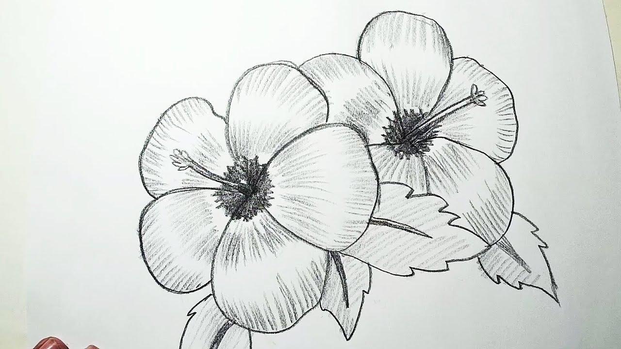 Draw hibiscus flower tutorial flowers online 2018 flowers online hibiscus ink style vector drawing hibiscus tattoo and drawings hibiscus ink style vector drawing how to draw a beautiful hibiscus flower step by step izmirmasajfo