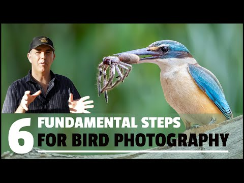 SIX FUNDAMENTAL steps to take HIGH QUALITY bird photographs. from YouTube · Duration:  21 minutes 16 seconds