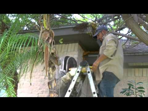 Exposed Bee Hive removal in Mcallen, Texas by Luis Slayton from Bee Strong Honey and Bee Reemoval