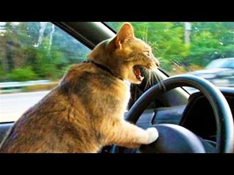 Best Funny Cat Videos to Keep You Smiling 😸 Funny Cats Videos #5