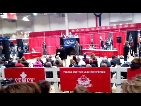 2017 Royal Winter Fair cattle auction 2