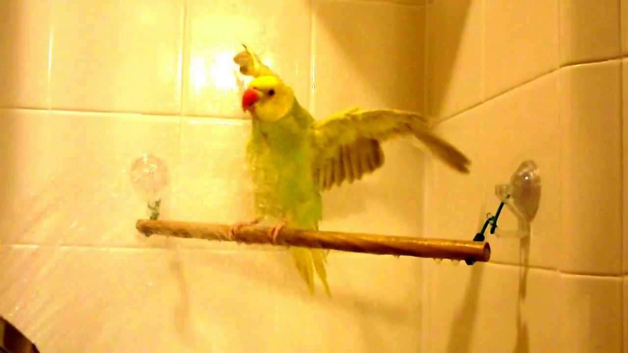 Homemade Bird Perch Www Pixshark Com Images Galleries