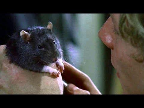 幻の動物パニック、ネズミの名演集/映画『ウイラード』DVD本編映像