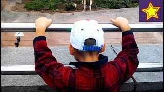 Развлечение для детей Зоопарк Животные. Игорюша в Москве Kids Zoo Animals