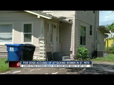 Five pit bulls bite two people in St. Pete