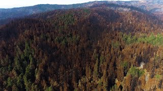 Big Basin redwoods: Drone video shows extent of wildfire over famed state park