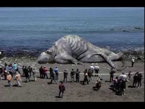 30 Najdziwniejszych zwierząt świata, o których nie miałeś ...