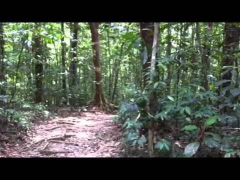 Tropical forests of Trinidad, Asa Wright Nature Center
