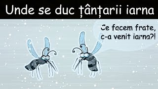 Unde Se Duc Tantarii Iarna - DLJ#4