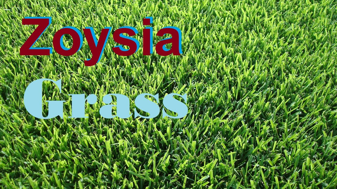 What Gr Is That Zoysia Empire Zeon Lawn