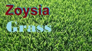 Zoysia Grass - [What Grass Is That] [Zoysia Grass] [Empire Zoysia] [Zeon Zoysia] [Zoysia Lawn]