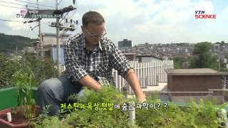 [마이웨이] 옥상 텃밭에서 과학을 찾다! 미국청년 저스틴