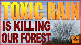 TOXIC RAIN IS KILLING OUR FOREST. Climate Engineering - Chemtrail Fallout.