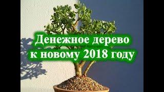 Денежное дерево к новому 2018 году