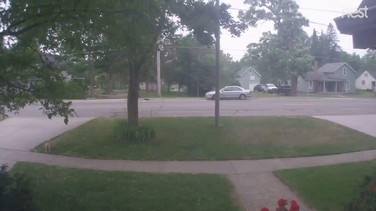 Neighbor S Dog Pooping In Yard Youtube