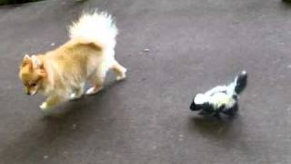 Ginger & Baby Skunk