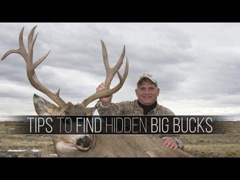 Hunting Big Sagebrush Mule Deer, Trophy Buck Hunts