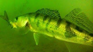 Поклевка Судака. Судачков отпустил ! :) Рыбалка. Ловля на поплавочную удочку. fishing.