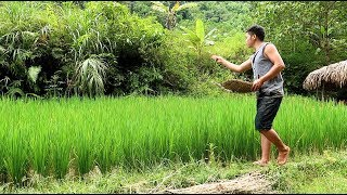 Primitive Skills: Integrated farming, Snail, Fish and rice
