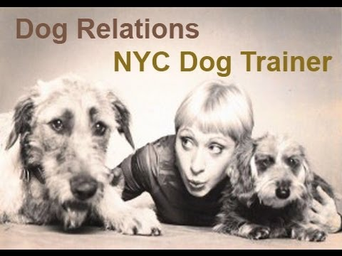 Thumbnail for Dog Training in NYC