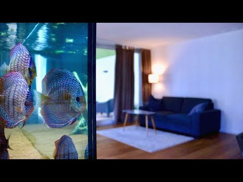 120 Gallon Living Room Discus Fish Tank | Juwel Rio 400
