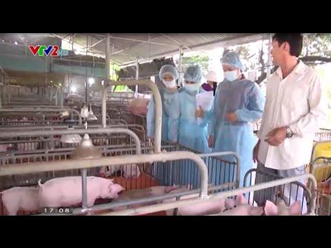 Bạn của nhà nông VTV2 - Đột phá trong chăn nuôi lợn