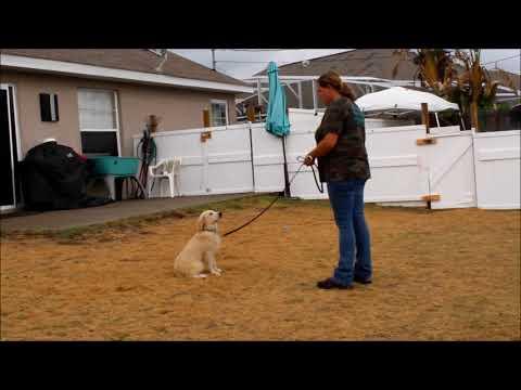 Ruby 1 week puppy academy update