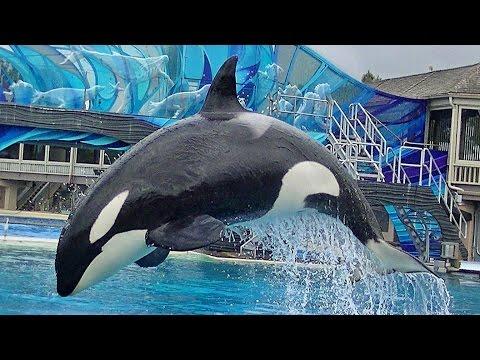 One Ocean (Full Show/Full HD) Apr 24 2015 - 2pm - SeaWorld San Diego