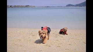 SUP初体験。しかし手違いで1時間遅れ。その間皆で砂浜で自由に遊びます~
