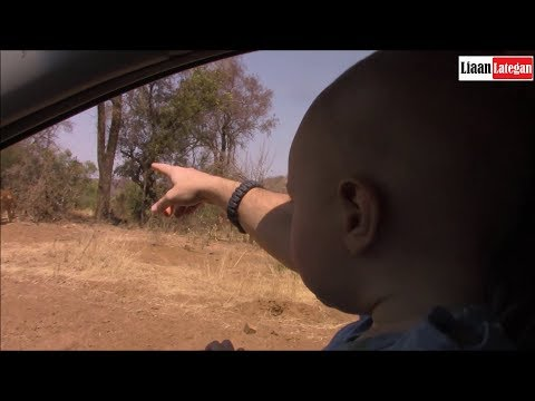The Magnificent 7 with my family on Safari | Pilanesberg Nature Reserve