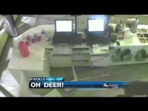 WEBCAST: Oh Deer!