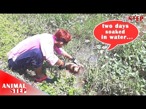 Pitiful Two-Legged and One Blind Eye Puppy Soaking In Water Waiting for Help