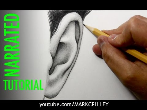 How to draw ears front view youtube ccuart Image collections