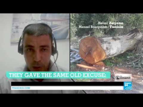 Observers vs Climate change: Saving eucalyptus trees in Tunisia